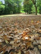 Ein ungewohntes Bild im August: die Bäume lassen ihre Blätter fallen